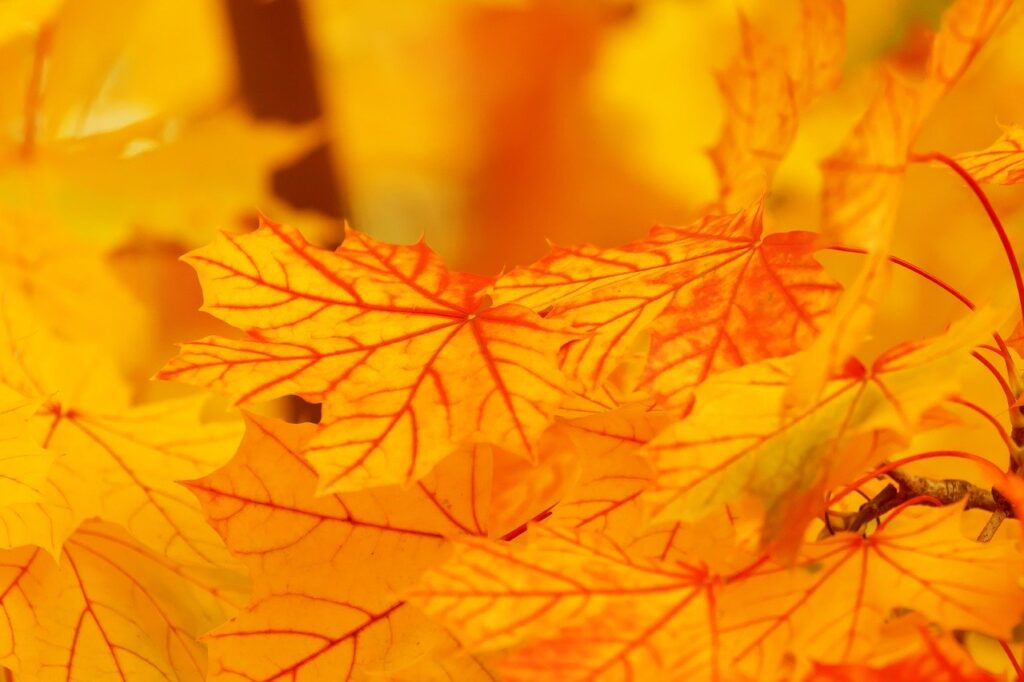 abstract, autumn, bright